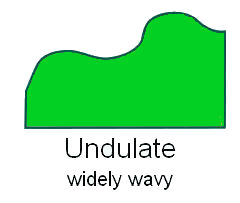 leaf-margin-undulate