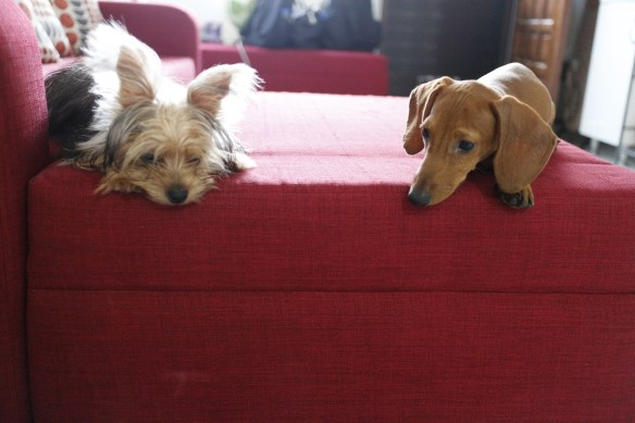 doggies on couch